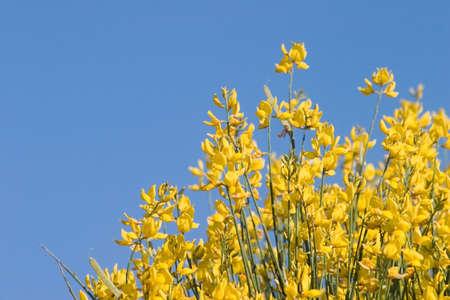 Blue & Yellow flowers. Stock Photo - 912409