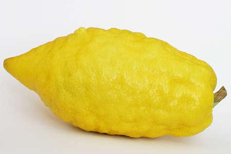 Protected Jewish citron. Stock Photo