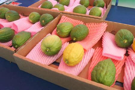 tabernacles: Jewish citrons display, Sukkot - Tabernacles Stock Photo