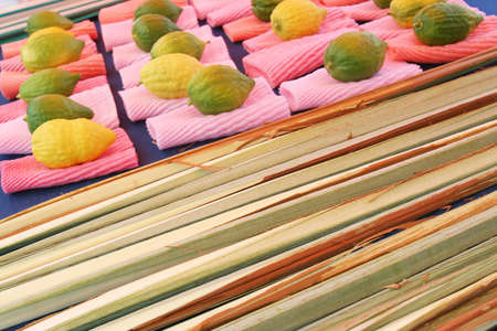 Citrons jud�o y ceremonial de palma frond pantalla, Sukkot - Tabern�culos