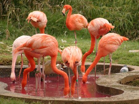 Pink flamingos Stock Photo - 912449