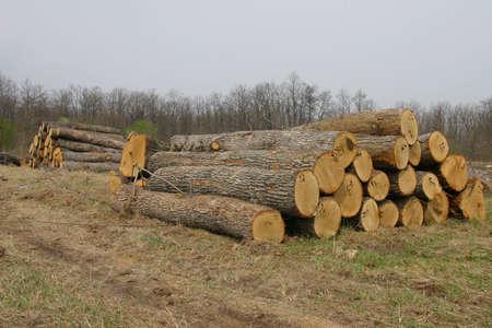 Wood sawmiil, the Black sea coast. Stock Photo - 915662