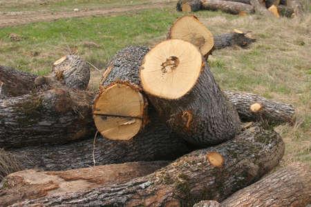 Wood sawmiil, the Black sea coast. Stock Photo - 915663