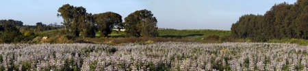 Panorama del campo, HaSharon, israel� Foto de archivo