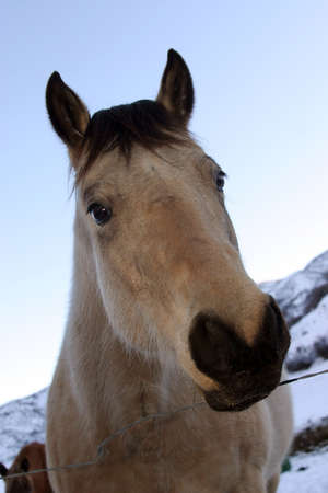 Horse's head, snow in the background Stock Photo - 915479