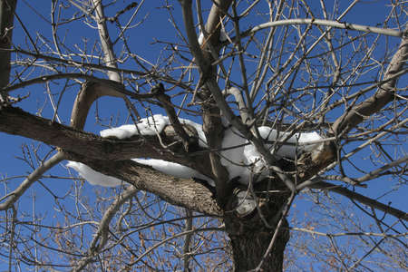 Nieve y �rboles, Colorado, EE.UU.