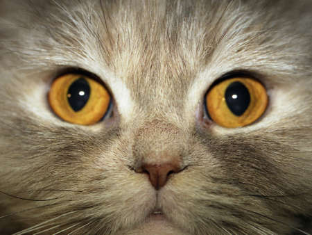 Enorme ronda AMARILLO ojos de gato. (como que originalmente). se centr� en el centro de la imagen. Scan de una negativa.