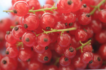 red currants.  Macro, shallow DOF with focus on the center of the image .