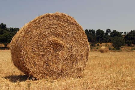 Round haystack Stock Photo - 1327238