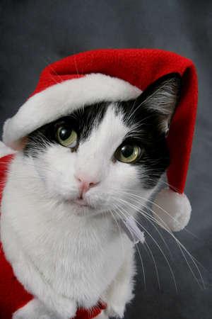 Un gato que llevaba un traje rojo de Santa  Foto de archivo