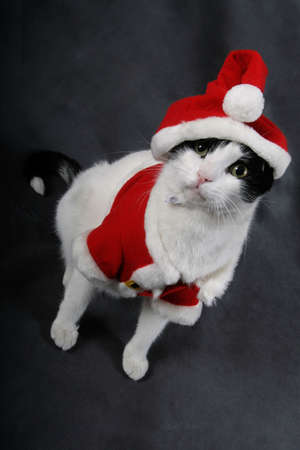 A cat wearing a red Santa suit Stock Photo - 2154073