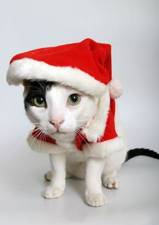 A cat wearing a red Santa suit
