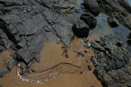 At the beach, Goa, India Stock Photo - 2770368