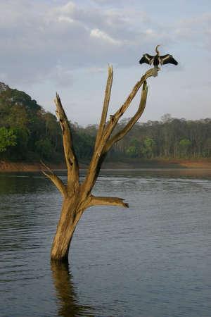 Periyar reserva de vida silvestre, cerca de Kumily, Kerala, India