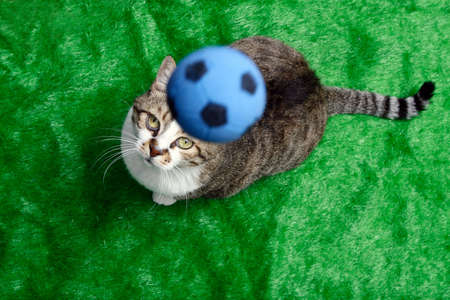 A cat playing soccer (football), over green Stock Photo