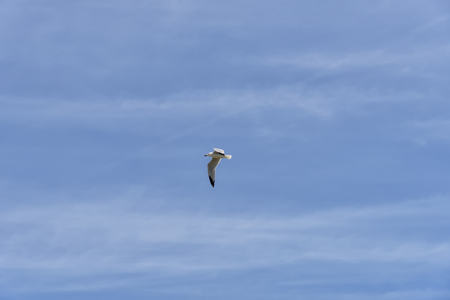 Summer day landscape of soaring seagull in the bright blue sky. Relax interior photo. Horizontal Stock Photo