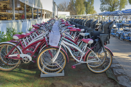 Many bicycles for rent. Excursion, tour in park. Leisure activities and recreation in Agamon Hula, Israel Imagens - 124811392