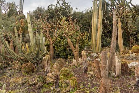 Unique Cactus Garden displays a variety of desert plants, cactuses. Beautiful tourist attractions in Israel. Walking in exotic garden. Landscape Imagens