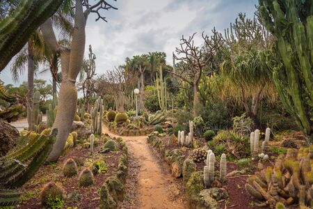 Unique Cactus Garden displays a variety of desert plants and cactuses. Beautiful tourist attractions in Israel. Walking in exotic place. Landscape
