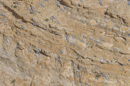 Flock of pigeons in the canyon Ein Avdat in the Negev Desert of Israel. Traveling in Israel. Majestic wonders of nature