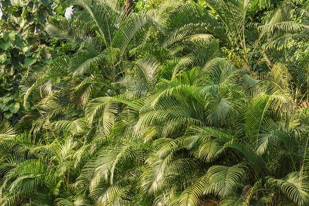 Amusement park. Attraction Tropical palm forest. Landscape for background