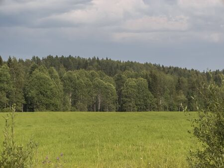 Field in front of a forest in in Karelia, Russia. Summer rural locality landscape. Forest edge Reklamní fotografie