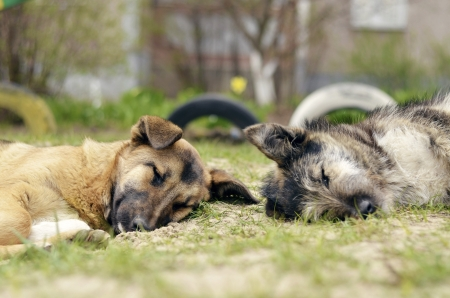 Two dogs sleeping in the midday together on the playground photo