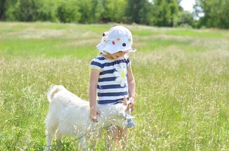 young girl: Little girl and young white goat in summer
