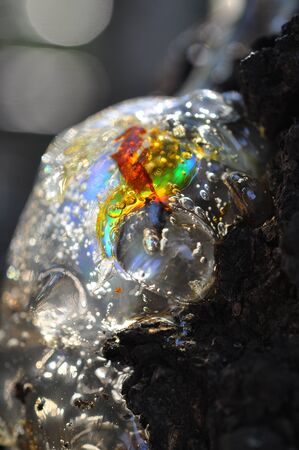 Gum, glue, resin, juice from the bark on the trunk of a tree. In pitch a bright multi-colored clot, a rainbow. Natural abstraction.