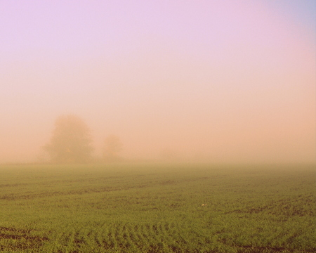 Morning in a thick pink-lilac fog with poorly visible trees in the background and young green shoots in the fields in the foreground in spring.