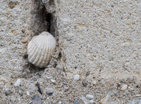 Texture. Brick and plaster. Shell in the crevice. Still life. Close-up.