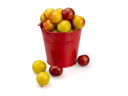 Plums yellow and burgundy in a red bucket. Plums scattered around the bucket. On a white background. Isolated. Close-up. Still life.