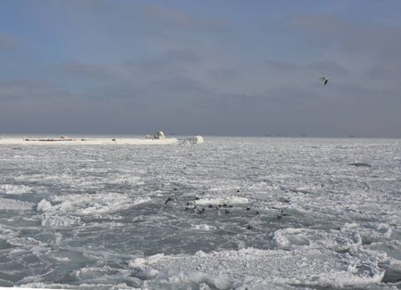 Frozen Black Sea in winter. Icy pier under a snowy sky. Seated and soaring seagulls. In the distance there are ships on the roadstead.