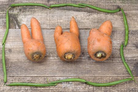Unusually shaped carrots in the frame of green beans. Funny carrots. Three fat men. Still life. On an old wooden background.
