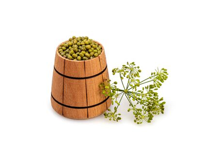 Mash in a wooden tub and dill inflorescence on a white background. Organic legumes. Green grain in a wooden bucket. Still life, isolated. Close up view. 写真素材