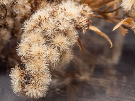 Dried flowers close up. Dried plant. Dry flower. Macro. 写真素材