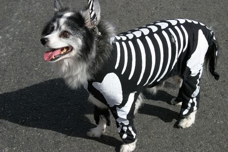 Dogs costume Stock Photo