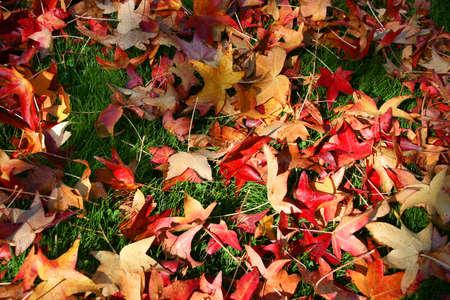Autumn at the park Stock Photo - 2365100