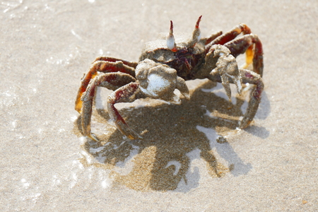 Photo picture of a charming multi-colored crab in a natural environment on the background of sand and rocks.