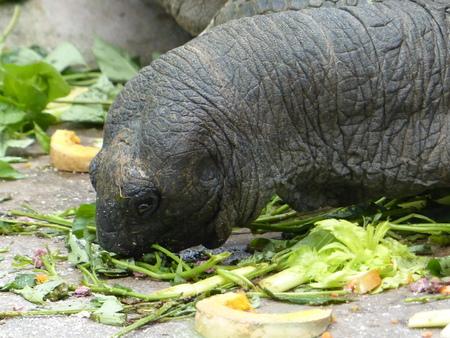 Eating a huge beautiful turtle.