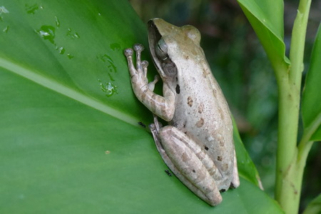 photo picture of a beautiful frog on the background of a living delightful nature.