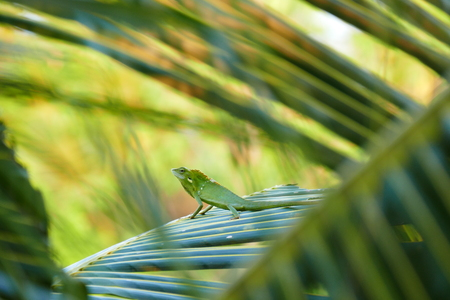delightful beauty lizard on the background of wildlife.