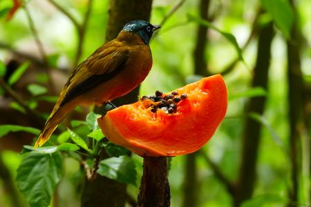 Beautiful tropical bird on a green tropical forest background. Banco de Imagens