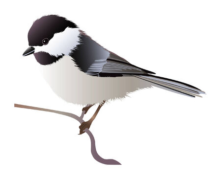 Negro tope chickadee perching en una ramita  Ilustración de vector