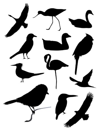 Twelve bird silhouettes 向量圖像