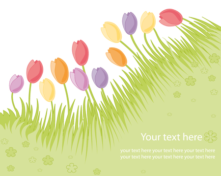 Spring garden with tulips  Vector