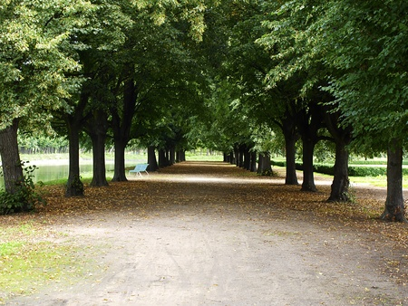 avenues of deciduous trees with a touch of autumn Stock Photo - 10255570