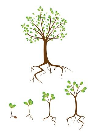 collectie bomen van klein tot groot