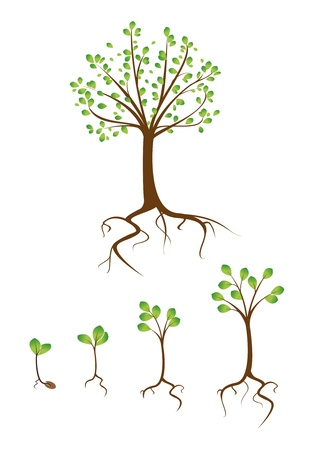 collection of trees from small to large Stock Vector - 11923763