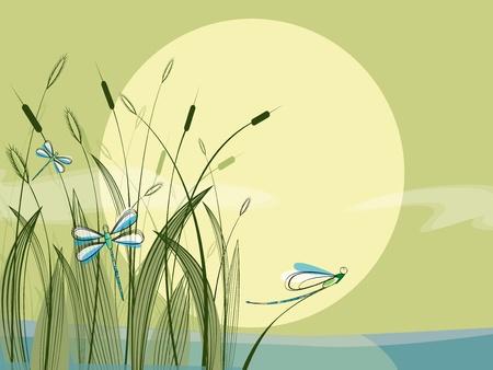 marshland: Morning sunrise over the lake
